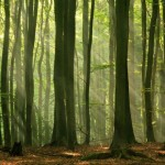 Green Forest promises fresh, clean air for a natural Oxygen boost.